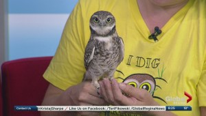 Nature Saskatchewan and the Burrowing Owls Interpretive Centre