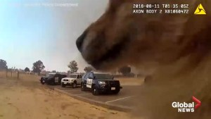 Dramatic video captures a daring mission to save shelter animals from California wildfire