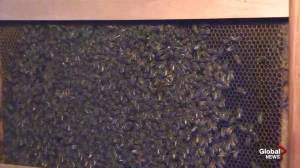 Amazing Agriculture Adventure: Beekeeping