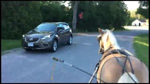 Harwood Horse trainer has issues with traffic