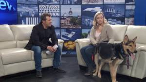 The Kingston Humane Society visits Global News Morning