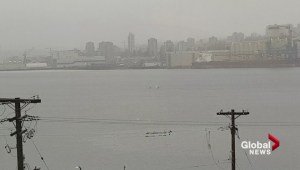 Mom and toddler excited by pod of orcas spotted in Burrard Inlet