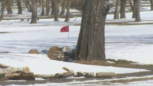 Ongoing wintry weather delays season for Southern Alberta golf courses