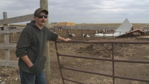 Southern Alberta dairy farm recovering from Tuesday's windstorm