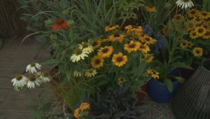Gardenworks: Fall Flowers