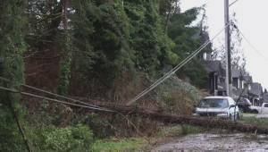 Maple Ridge storm damage