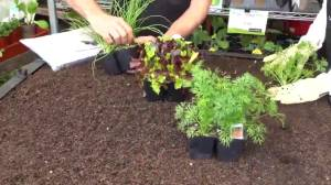 GardenWorks: Vegetable Growing