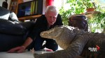 Frenchman shares home with over 400 reptiles including alligators, snakes and tarantulas