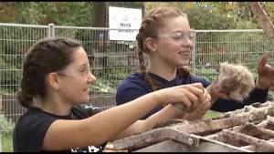 Sustainable learning in  Peterborough's Ecology Park