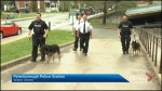 Peterborough police dogs Hal and Wolfe retire