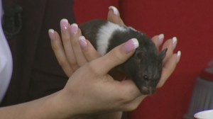 Adopt a Pet: Cookie the hamster