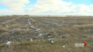 Wet weather creating harvest challenges for Saskatchewan farmers