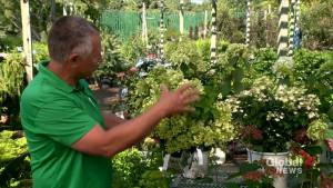 Summer planting and lawn fertilizing tips from Dutch Growers