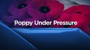Poppy under Pressure series preview