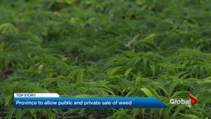 Government of Ontario unveils plan on marijuana