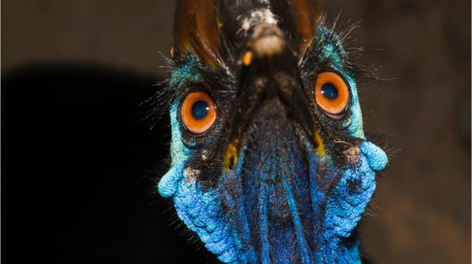 Large cassowary that killed its Florida owner to be auctioned off