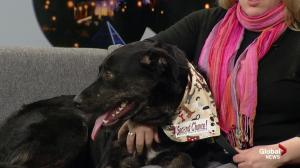 SCARS stops by with 2 pups up for adoption