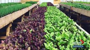 Alberta legislation aims to help regional producers