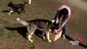 Calgary woman puts out toy boxes for dogs to commemorate passing of canine companion