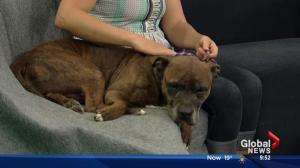 SCARS looking for a new home for Bula