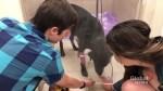 Service dog taken to emergency vet after stay at PetSmart