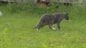New Brunswick Cat Colony survey highlights cat colony problem