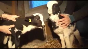 Meet the newest arrivals at Five Star Farm