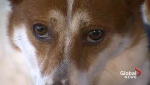 Dogs rescued from Chinese meat market now in Nova Scotia