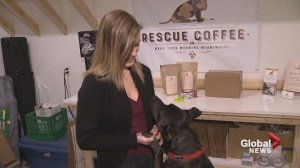 'Sip a cup and save a pup': N.B. woman blends love of pets and coffee