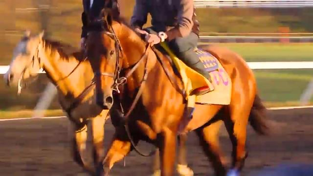 Belmont Stakes live stream: How to watch Justify go for the Triple Crown without a TV