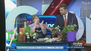 Kath Smyth takes viewer questions on spring gardening