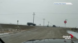 Viewer footage shows numerous cars running rural Alberta 4-way stop