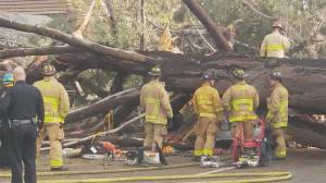 Powerful California storm proves fatal over weekend