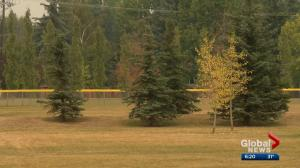 Calgary's late summer heat stressful for trees