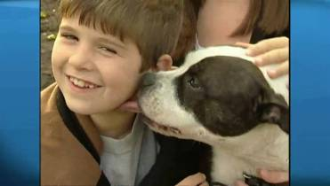 Toronto's pit bulls are almost gone  So why are there more
