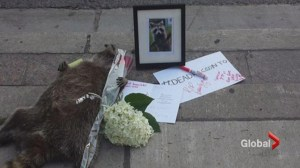 An obituary for #DeadRacoonTO
