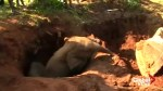 Two baby elephants rescued in Sri Lanka