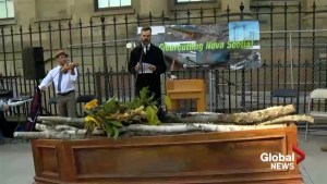 Activists hold funeral for clear-cutting in downtown Halifax
