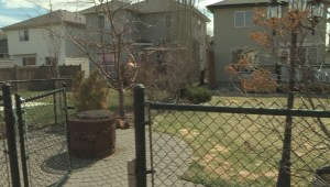 Edmonton woman questions neighbourhood safety after dog-on-dog attack