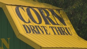 North Okanagan corn stand robbed by knife-wielding thief