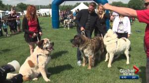 Edmontonians take in Pets in the Park on Saturday (01:03)