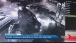 Dramatic video shows car driving into a dozen vehicles at west-end dealership