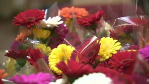 Lethbridge HIV society fundraising with spring daisies (01:31)