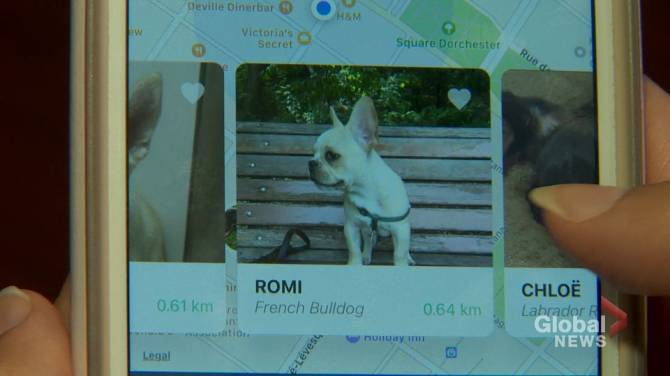 Montreal Based Company Spreads Puppy Love But Not Everyone Is Convinced Montreal Globalnews Ca