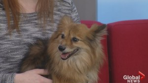 Adopt a Pet: Zira looking to be the centre of attention