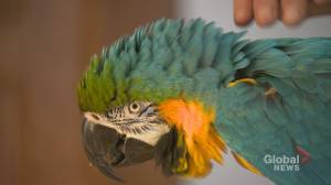Popular parrot finds new home after closure of Calgary's Sunnyside Greenhouses