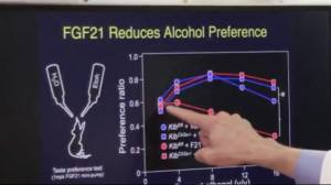 New discovery could lay groundwork for effective alcoholism treatment