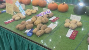 Growers show off their produce at Armstrong's Interior Provincial Exhibition
