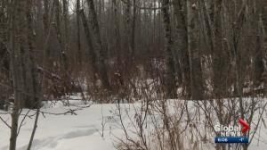 Area residents worry about proposed sandpit for Redwater area
