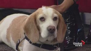 Adopt a Pet: Cooper
